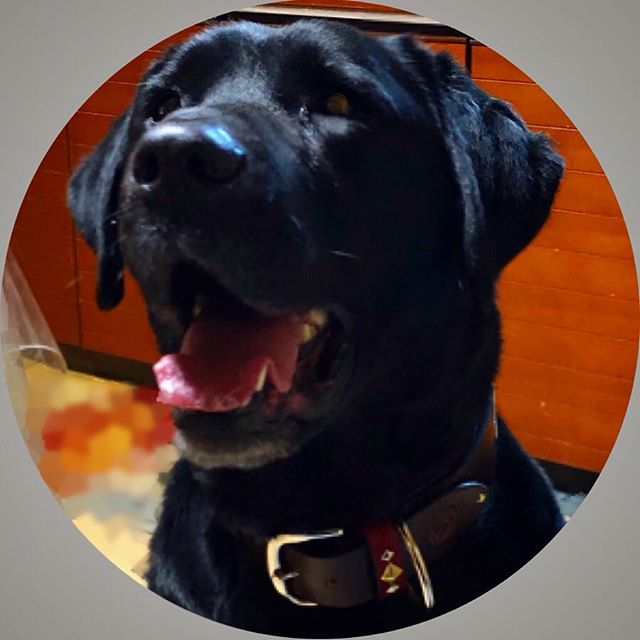 Huck-kun.・・・・・☆40mm Normal collar☆ ・☆STUDS☆ ・☆DOGTAG CUSTOM☆・ ・・#original#leather#accessories#dogcollar#dogtag#studs#belt#handmade#kagoshima#dog#dogs#dogstagram #instadog#lab#labrador #labradorretriever #blacklabradorretriever #blacklab #aomori #犬#首輪#迷子札#ベルト#ラブラドール#ラブラドールレトリバー #黒ラブ#大型犬#青森・・・☆ベルトの様なゴツイ首輪☆ ・☆ベルトループにだけ、スタッズカスタム☆
