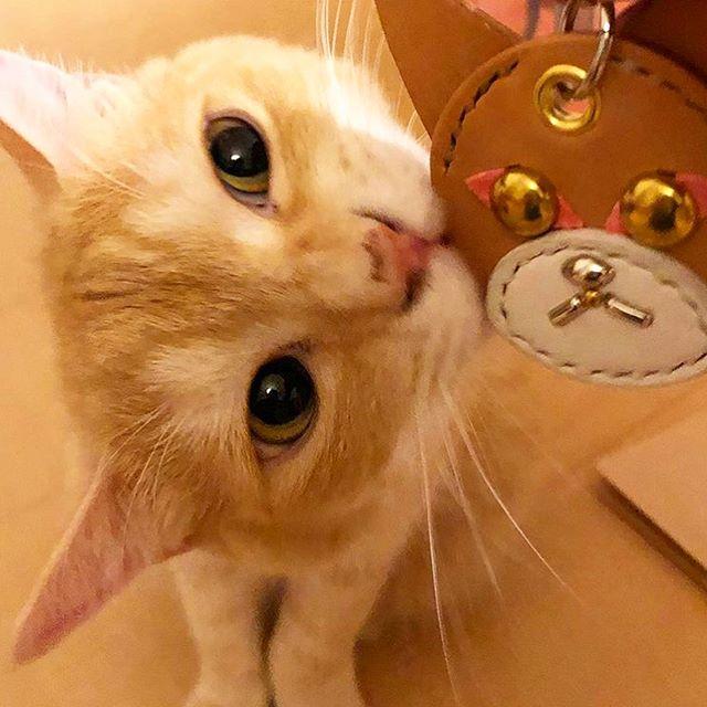 Chachamaru-kun.・Shishimaru-kun.・☆CAT☆KEYHOLDER☆・・・・・#original #leather #accessories #keyholder #charm #studs #handmade #kagoshima #cat #catstagram #instacat #cats #catsofinstagram#funnycat #wildcat #pet #whitecat #blackcat #orangetabby #catcollar #cattag #猫 #首輪 #にゃんこ #キーホルダー #チャーム #白猫 #黒猫 #茶トラ #鹿児島・・・☆ニャンコでも、キーホルダーやチャームに出来ますよ☆