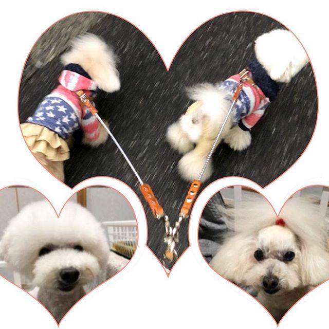 Sakkun-chan.・Saisai-kun.・・・☆ショルダーリード☆・・・・・☆以前、多頭引き用にボールチェーン・リードをオーダーして頂いていたお客様☆・☆今回、ボールチェーンを繋げるショルダーリードをオーダーして頂きました☆・・・#original #leather #accessories #dogcollar #dogleash #dogtag #studs #handmade #kagoshima #dog #dogs #dogstagram #instadog #doglover #doglife #poodle #toypoodle #toypoodlew #犬 #首輪 #リード #迷子札 #プードル #トイプードル #多頭飼い