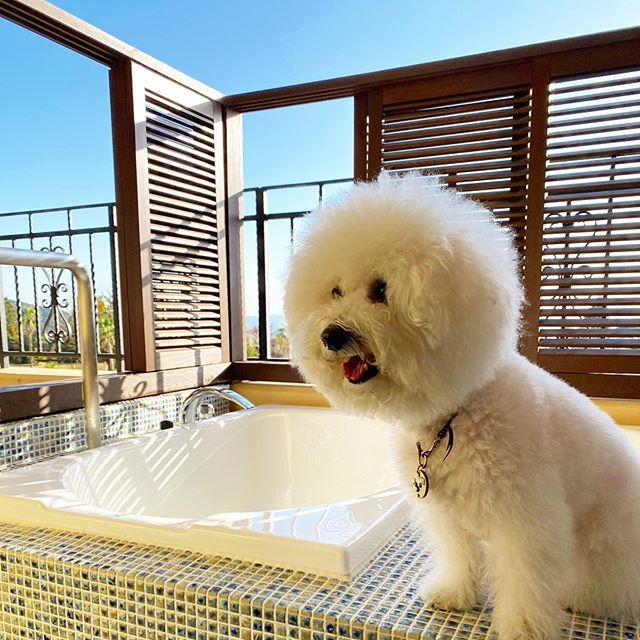 ☆2019年も、大変お世話になりました☆・☆毎年ですが、1年があっという間ですね☆・☆来年も、エルビスとゆっくり過ごす時間が増えるといいな〜☆・☆皆様も、良いお年をお迎えください☆・・#original #leather #accessories #dogcollar #dogleash #dogtag #studs #spangle #handmade #kagoshima #dog #dogs #dogstagram #instadog #doglife #doglover #poodle #maltese #bichonfrise #hotsprings #lavistakirishimahills #犬 #首輪 #迷子札 #プードル #マルチーズ #ビションフリーゼ #温泉 #共立リゾート #ラビスタ霧島ヒルズ