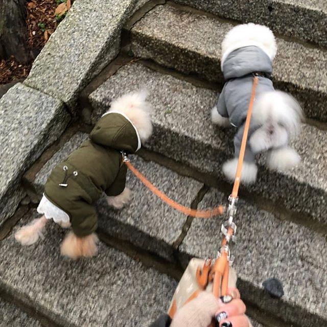 Sakkun-chan.・Saisai-kun.・・・☆リード・カスタム☆・・・☆いつも、拘ってオーダーして下さるお客様☆・☆今回は、軽量で製作したい(重さ指定)とオーダーして頂きました。・・・☆ありがとうございます☆・#original #leather #accessories #dogcollar #dogleash #dogtag #studs #handmade #kagoshima #dog #dogs #dogstagram #instadog #doglover #doglife #poodle #toypoodle #toypoodlewhite #fukuoka #鹿児島 #犬 #首輪 #リード #迷子札 #プードル #トイプードル #多頭飼い #福岡 ・・・☆今週も、日曜日のみの営業になります☆