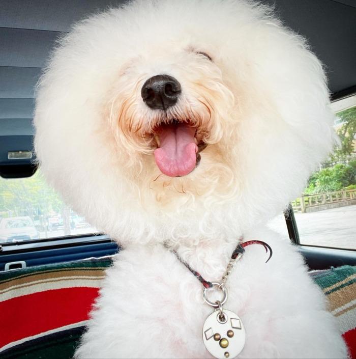 ☆今日も蒸し暑いですね☆・・・・・☆今週も本日と明日の営業になります☆・・・#original #leather #accessories #dogcollar #dogleash #dogtag #studs #handmade #kagoshima #dog #dogs #dogstagram #instadog #doglife #poodle #maltese #bichonfrise #nissan #gloria #y30 #犬 #プードル #マルチーズ #ビションフリーゼ #迷子札 #キーホルダー #日産 #グロリア #y30 #鹿児島
