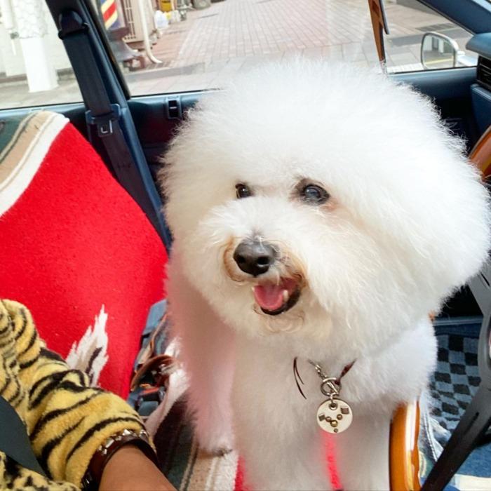 ☆HAPPY・NEW・YEAR☆・・・☆2021☆・・・☆本年もよろしくお願い致します☆・・・・・☆本日と明日の営業になります☆・・・#original #leather #accessories #wristband #dogcollar #belt #dogleash #keyholder #dogtag #wallet #studs #handmade #kagoshima #dog #dogs #dogstagram #doglife #poodle #maltese #bichonfrise #nissan #gloria #y30 #犬 #プードル #マルチーズ #ビションフリーゼ #日産 #グロリア #鹿児島
