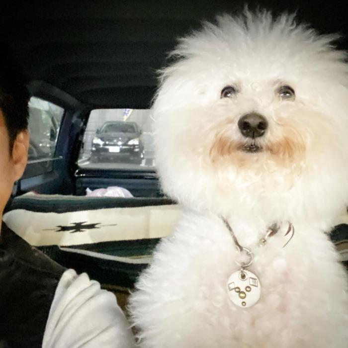 ・☆最近暖かい日が多くなってきましたね☆・・・☆He loves cars☆・・・☆今週も日曜日のみの営業になります☆・・・#original #leather #accessories #wristband #dogcollar #belt #dogleash #necklace #keyholder #dogtag #studs #spangle #handmade #kagoshima #rock #fashion #dog #bichonfrise #y30 #gloria #犬 #首輪 #リストバンド #ベルト #リード #キーホルダー #アクセサリー #スタッズ #鹿児島 #ビションフリーゼ