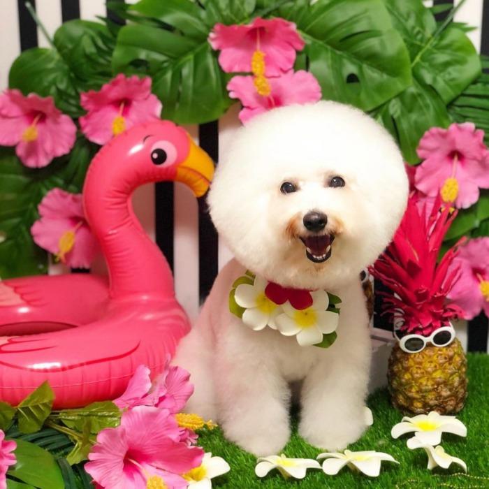 ☆Nice☆Smile☆・・・・・☆先日ですが可愛く撮って頂きましたよ〜☆・・・@dogsalon_parfait ・・・#original #leather #accessories #wristband #dogcollar #belt #dogleash #necklace #keyholder #dogtag #studs #spangle #handmade #kagoshima #rock #cutie #fashion #dog #dogs #bichonfrise #犬#首輪#リストバンド#ベルト #リード#キーホルダー#アクセサリー#スタッズ#鹿児島#ビションフリーゼ